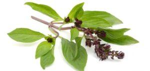 ستة أعشاب مفيدة لبشرتك